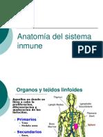 Anatomia Del Sistema Inmune1