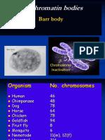 Barr Body1