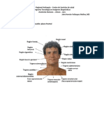 Anatomía Del Cáneo y Cara
