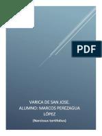 Varica de San José