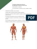 Estudo Dirigido Sistema Muscular
