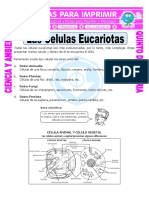 CELULA EUCARIOTA ANIMAL VEGETAL.pdf