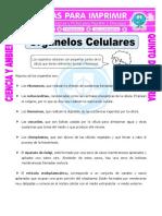 ORGANELOS CELULARES.pdf