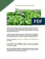 Como Plantar Alface Em Casa Dicas Fáceis e Prática
