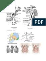 Regiones Anatomicas Del Cuerpo