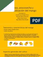 Cosechas y Postcosecha en el Mango