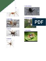 Clases de Arañas