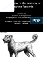 asset_8288_Anatomy of the Canine Forelimb.pdf