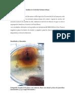 actividad antimicrobiana del cafe con penicilina  y ampicilina