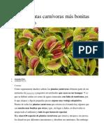 Las 5 plantas carnívoras.docx