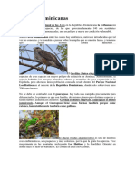 10 Aves Dominicanas