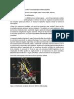 Factores de Transcripción y Control Transcripcional en Células Eucariotas