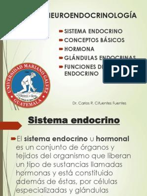 yegua parto endocrinología diabetes