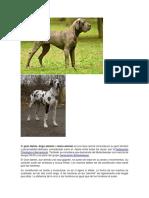 El DANES.pdf