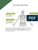Los 7 Tipos de Huesos Del Cuerpo Humano