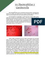 Haemophilus y Gardnerella