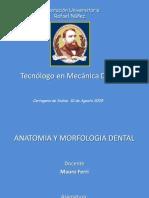 Anatomia y Morfologia Dental