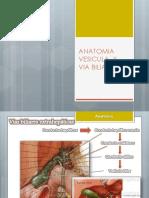 Vesicual Biliar y Radiologia