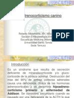 Hiperadrenocorticismo canino