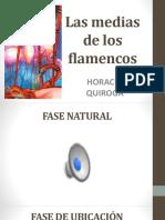 Las medias de los flamencos. Horacio Quiroga. PPT