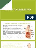 Anatomia - Aparato Digestivo