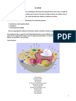 CÉlula. Tipos Clasificación Estructura Organelos