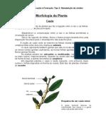 Morfologia Da Planta- A Folha
