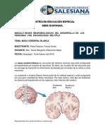 Materia cerebral blanca.docx