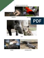 ANIMALES SILVESTRES Y DOMESTICOS VANNIA 14.11.18.docx