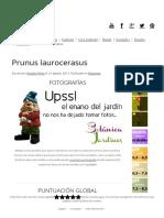 Ficha de Prunus Laurocerasus - Botánica Y Jardines
