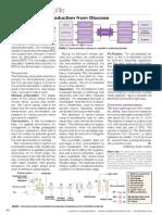 Bio-Butanediol Production From Glucose