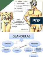 106201663-Mapa-Conceptual-de-Glandulas.pptx