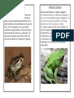 Anfibios chilenos