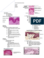 Skin & Subcutaneous Tissue