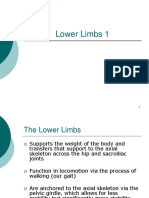 Lower Limbs 1.pdf