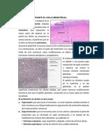 ENDOMETRIO-histologia
