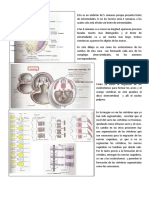 Desarrollo Musculo Esqueletico Min 13.30-18