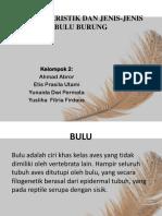 Karakteristik Bulu Burung