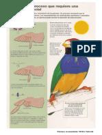 plumaje cambio.pdf