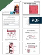 Rcp Completo 2017 Alumno.pdf