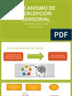 2_Mecanismo de Percepción Sensorial