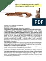 Arte Prehistórico - Bastón de Mando Del Pendo (Paleolítico Superior -Magdaleniense)