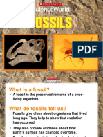 Lesson 5.1 Fossils