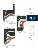 EMBRYO-Development of Arterial System