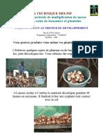 Piffiche.pdf Pif Important