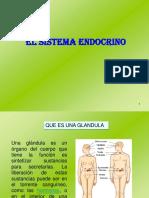 Sistema Endocrino Isaac