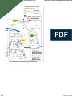 Mitochondrie2.pdf
