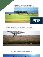 Ecosistemas. Jesus Zarate 2019