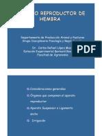 14 - Aparato reproductor hembra