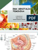Systema Genitalia Feminina
